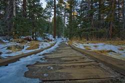 mount-san-jacinto-nature-trail.jpg