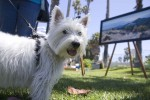 Santa Barbara puppies - img_0386