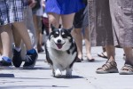Santa Barbara puppies - img_0423