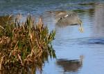 contorted-bird