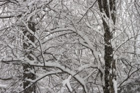A lattice of snowy branches