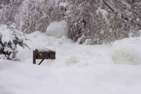 Sue, our letter carrier, probably won't be here today