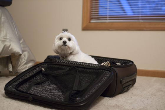 IMG_2652-Doppler Wants To Travel
