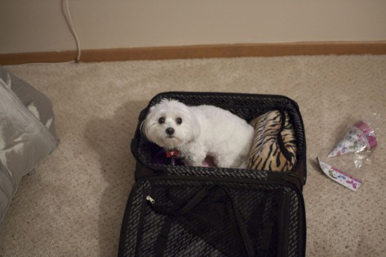 IMG_2658-Doppler Wants To Travel