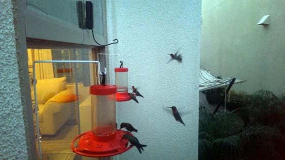 hummingpigs