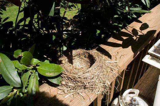 bird's-nest.jpg