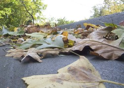 leaves in the driveway_1.jpg