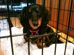 roxie in the crate.jpg