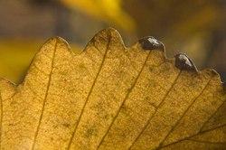 sleeping-giant-macro-leaf.jpg