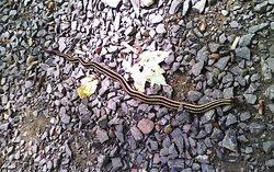 sleeping-giant-snake-1.jpg