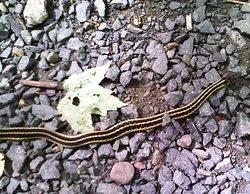 sleeping-giant-snake-2.jpg