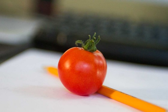 first-tomato