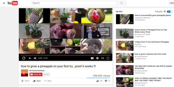 how to grow a pineapple on your first try   proof it works       YouTube